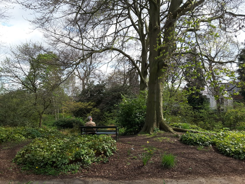 sheffield botanical garden