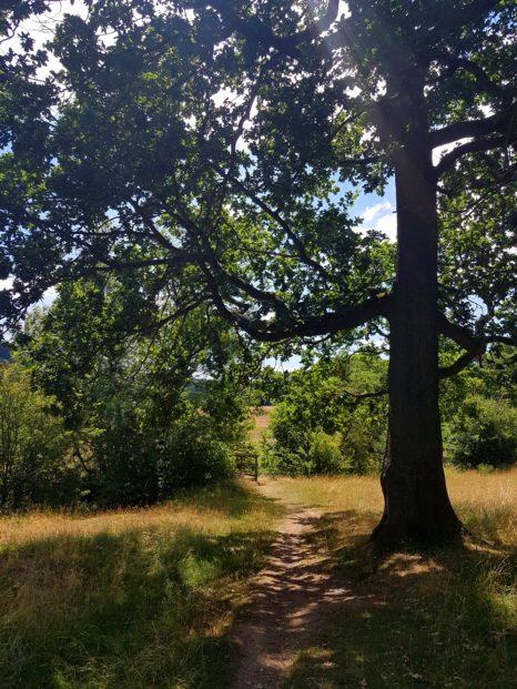 trans pennine trail worsbrough penistone