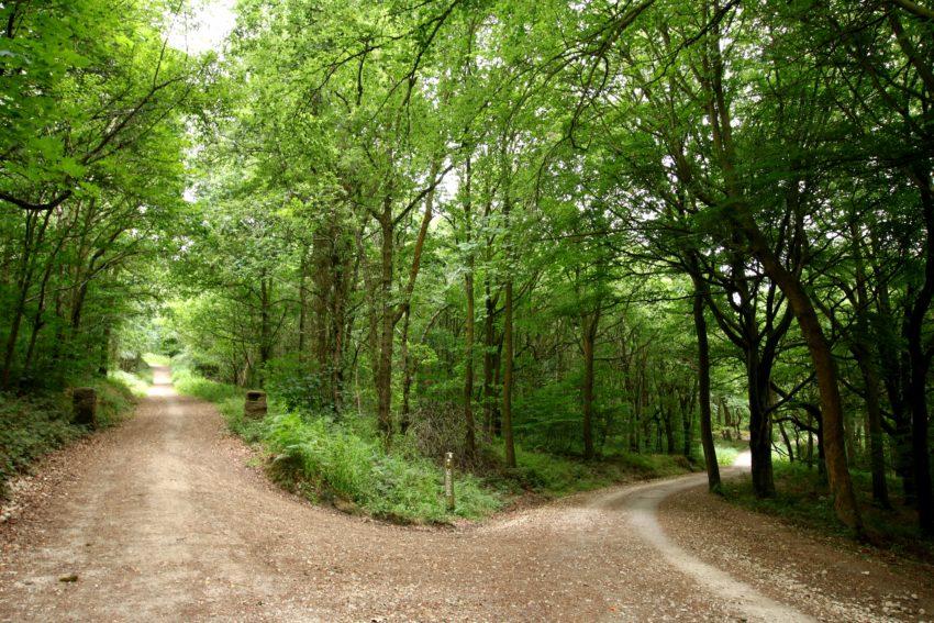 Wharncliffe rezerwat przyrody