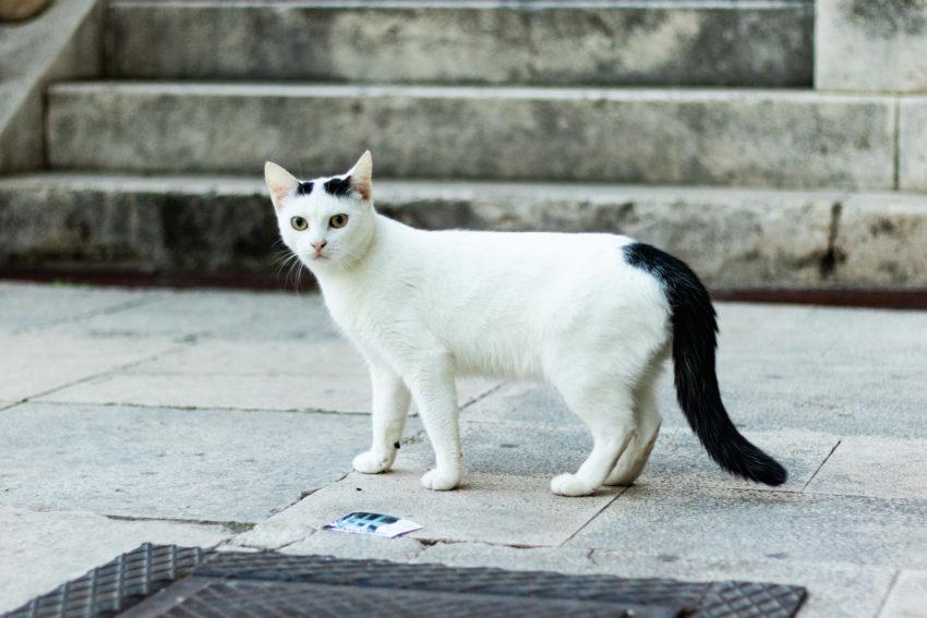 bezdomne koty chorwacja