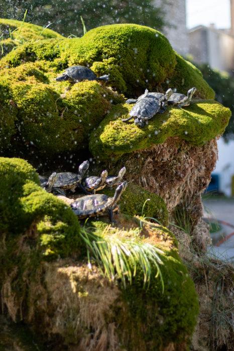 szybenik żółwie