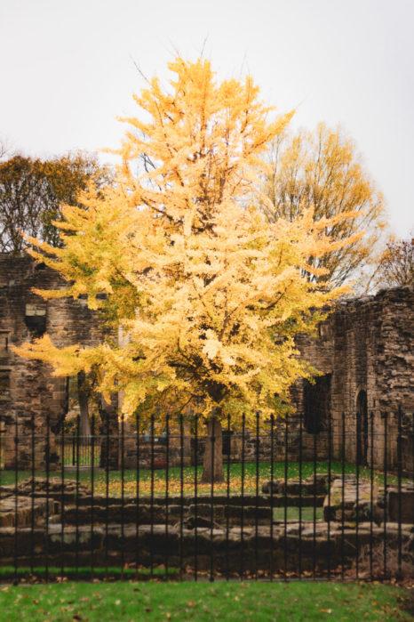 Jesień w Kirkstall Abbey