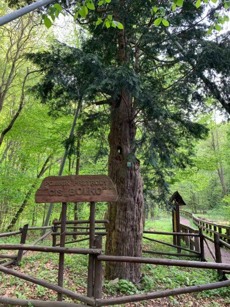 pomnik przyrody Bolek