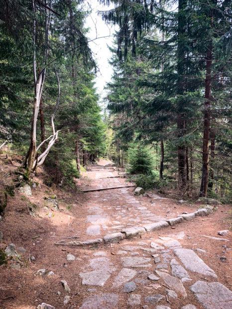 W drodze na polane - Dolina Pląsawy